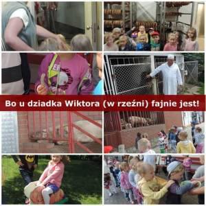 Facebook.com/Fundacja Międzynarodowy Ruch na Rzecz Zwierząt Viva!