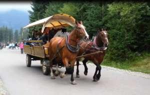 Los koni pracujących na szlaku wkrótce się poprawi. fot. facebook.com/ Ratujmy konie z Morskiego Oka