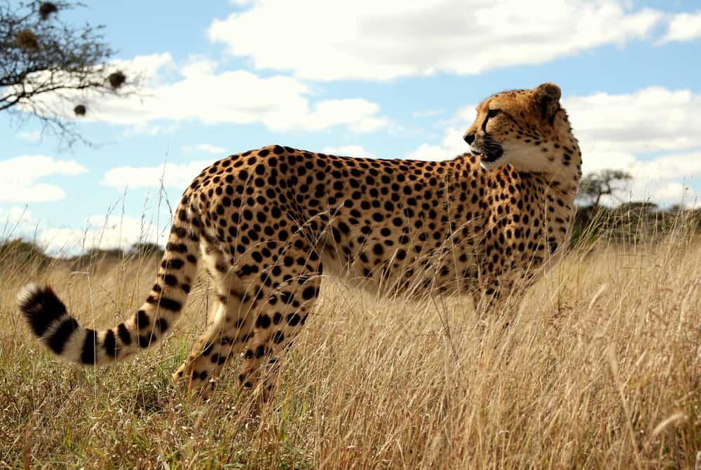 Botswana: koncern paliwowy dewastuje park narodowy