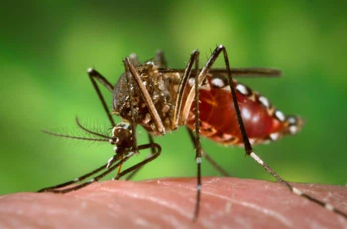 Wirus Zika przyczyną zaburzeń neurologicznych?