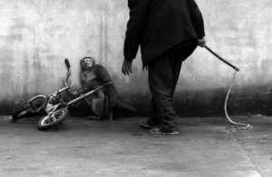 Słynne zdjęcie Chu Yongzhi, obrazujące okrucieństwo cyrków / fot. onegreenplanet.org