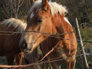 """Aktywiści """"Vivy!"""" chcą zcałkowicie zakazać długotrwałego transportu żywych zwierząt, fot. pixabay, ilasoulfly"""