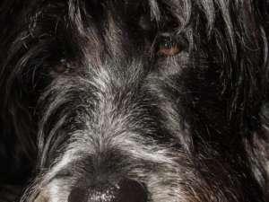 Los bezdomnych psów ma szansę choć trochę się poprawić, fot. pixabay.com/ Caligari77