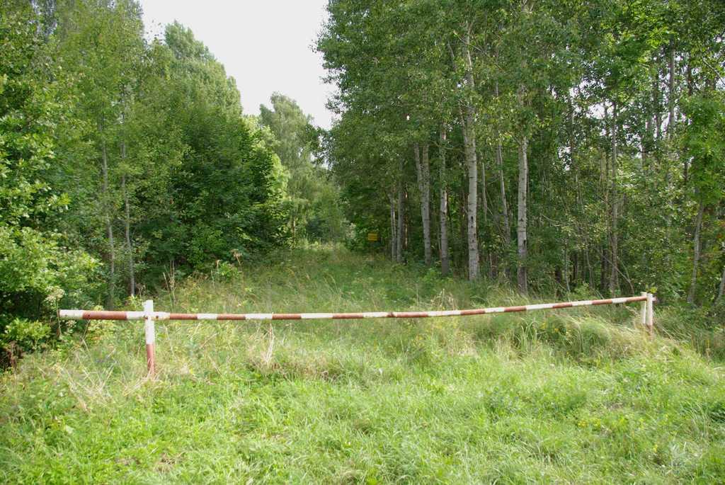 fot. wikimedia commons