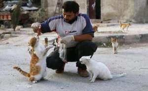 Syryjczyk z Aleppo dokarmia ponad 150 podopiecznych fot. thebestcatpage.com