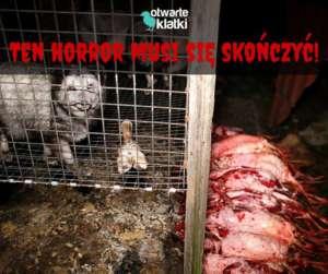 Podpisz petycję, nie odbieraj życia z powodu fanaberii! fot. Facebook.com/Otwarte Klatki