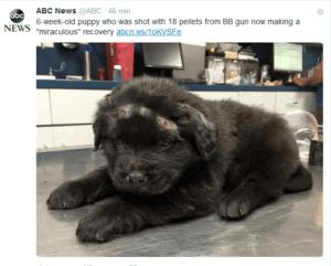 6 - tygodniowy szczeniak cudem uniknął smierci z rąk młodych sadystów / twitter.com