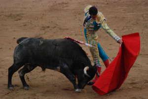 Hiszpanie powoli mają dość torturowania byków. Jest szansa, że korrida zniknie w całym kraju. fot. wikimedia commons