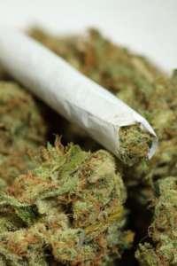 Marihuana łagodzi chroniczny ból towarzyszący rakowi, AIDS, czy uszkodzeniu rdzenia kręgowego. źródło: https://www.facebook. com/Medical-Marijuana-Canada-138200772884216/