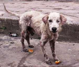 Wchodzę w życie przepisy pozwalające na surowsze kary dla znęcających się nad zwierzetami. fot. flickr.com/AmazonCares