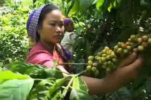 Osoba zbierająca kawę otrzymuje mniej niż 2% ceny kawy w supermarkecie. Połowa pracowników brazylijskich plantacji pracuje bez umowy o pracę. Mimo wytycznych etycznych dotyczących współpracy z dostawcami wielu z nich nie zapewnia pracownikom dostępu do czystej wody pitnej i odzieży chroniącej przed pestycydami, częste jest niewolnictwo za długi źródło: youtube