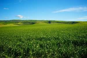 Kościół będzie mógł handlować ziemią do woli / wikipedia commons