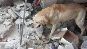 Dayko, bohaterski pies z Ekwadoru