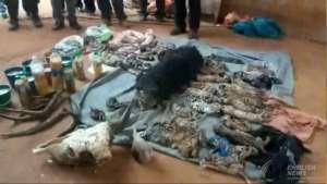 Zwłoki tygrysiątek, które tajskie służby ochrony przyrody znalazły w świątyni, fot. twitter.com/ ThaiPBS English News