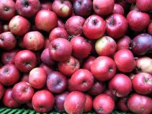 Polskie jabłka - według Szewdów nie nadają się do jedzenia / wikipedia commons