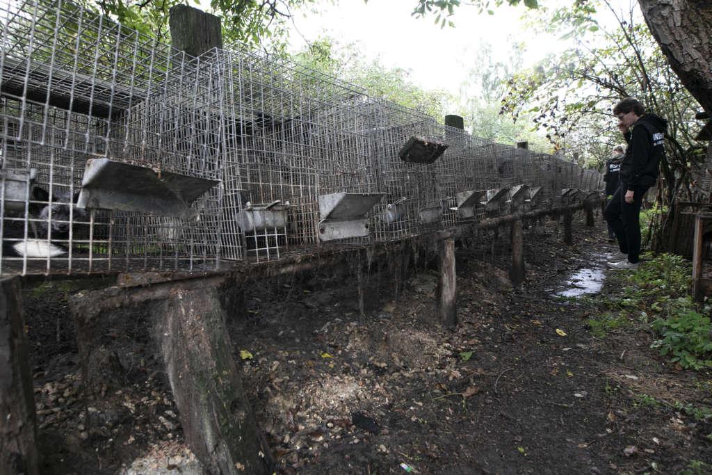 Jedna z alej pomiędzy klatkami, w których trzymane były psy i lisy, fot. Andrew Skowron