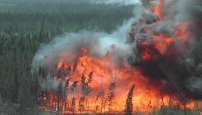 Pożar lasu